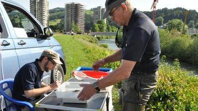 Michael Kugler (rechts) und Jan Schick notieren Grösse und Gewicht der abgefischten Forellen und Groppen. Bild: Sabine Camedda