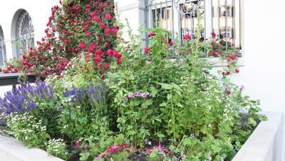 Im Städtli kümmert sich die «Gruppe Blühendes Lichtensteig» um die Bepflanzung, wie hier bei der alten Post. (Bild: Urs M. Hemm)