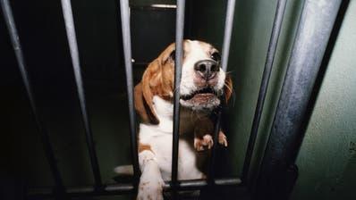 Bundesrat lehnt Initiative für ein Verbot von Tierversuchen ab