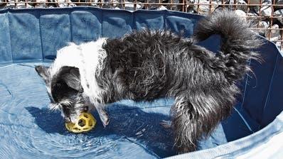 Es herrscht kein Hundewetter– Wie Haustieren das Leben in der Hitze erleichtert werden kann