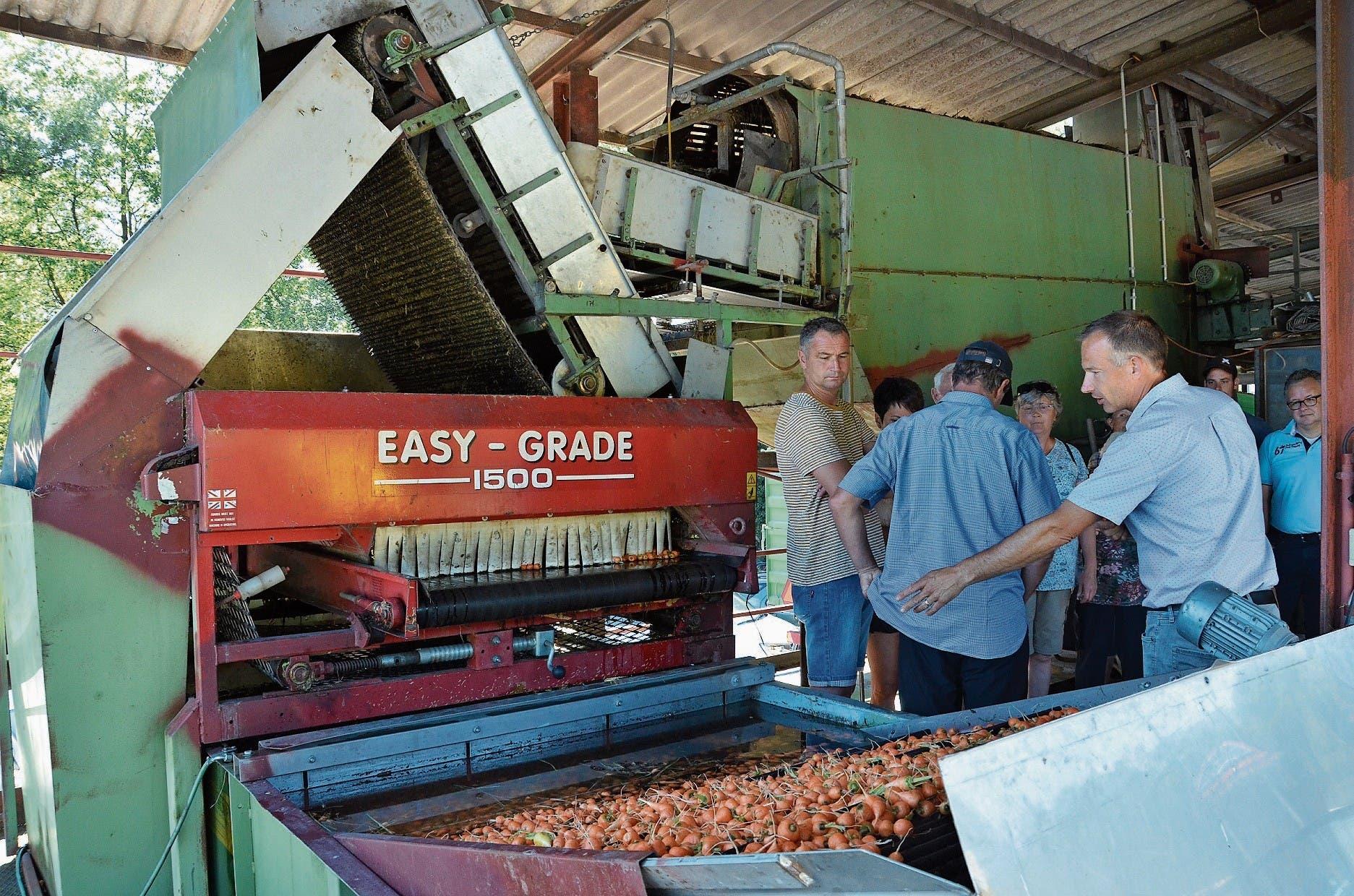 Diese Waschanlage ist seit 50 Jahren in Betrieb und wäscht die einzigen in der Schweiz angebauten Pariserkarotten. (Bild: Bilder: Katharina Rutz)