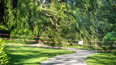 Der Ast der Hängebuche liegt abgebrochen auf dem Weg im Haffterpark. (Bild: Andrea Stalder)