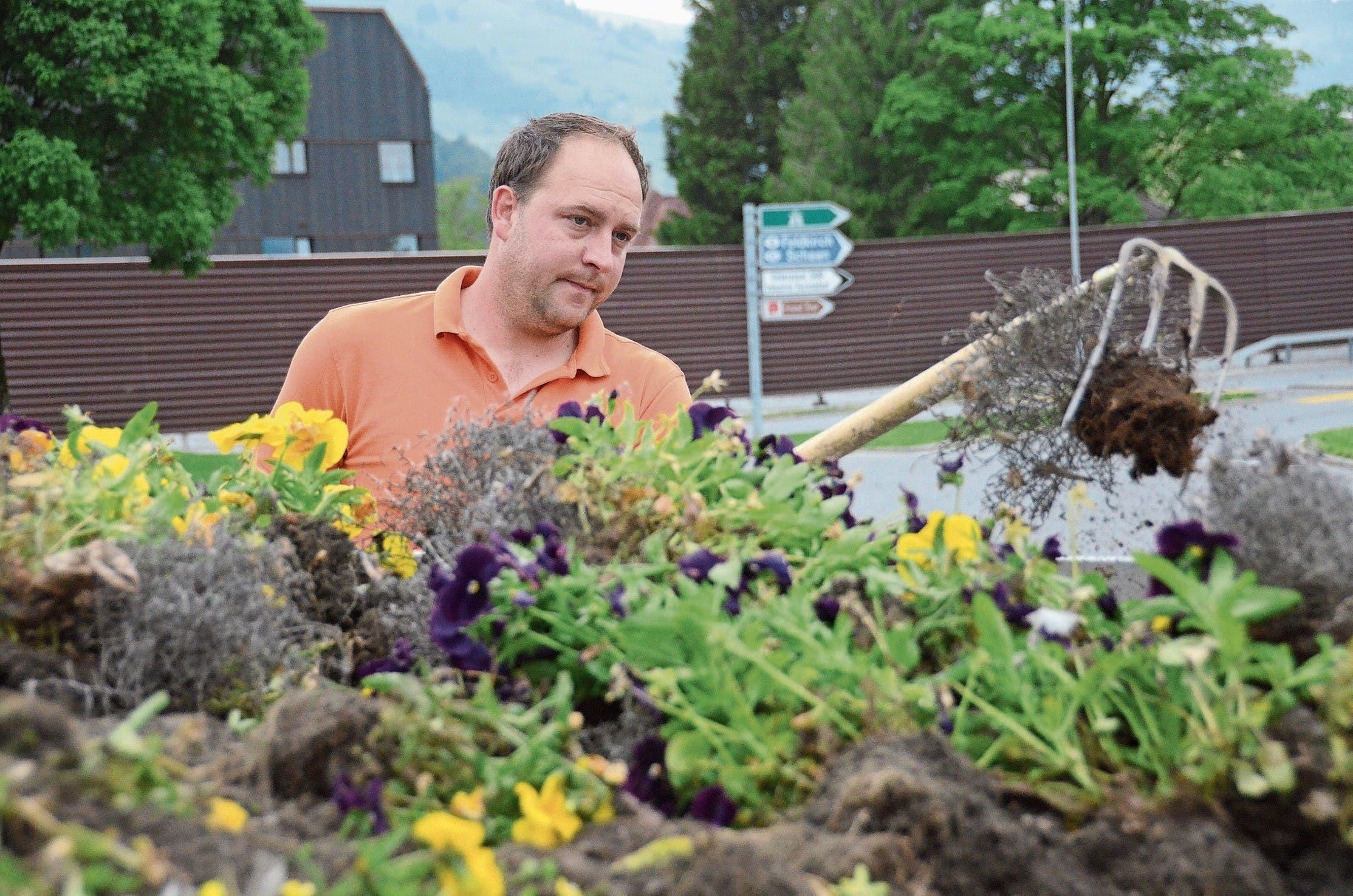 Niklaus Lehmann ist Mitarbeiter des Werkhofs der Stadt Buchs. Zweimal im Jahr bepflanzt er die grossen Rabatten um den Landi-Kreisel neu. (Bild: Bilder: Corinne Hanselmann)