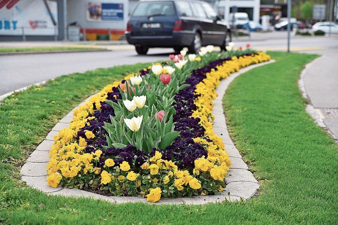 Im Frühling setzten die Tulpen schöne Farbtupfer. (Bild: Heini Schwendener)