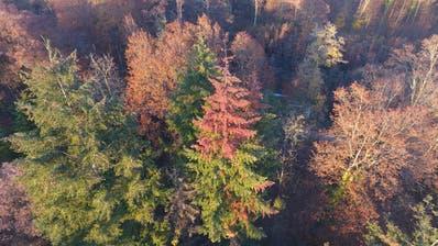 Klimawandel und Hitzesommer: Warum die Wälder so kahl sind
