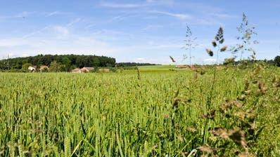 Der Bau von Windrädern auf dem Seerücken zerstöre die Landschaft, finden die Windkraftgegner vom Verein Pro Salen-Reutenen. Die beiden Dörfer der Gemeinde Homburg liegen auf rund 700 Meter über Meer. (Bild: Nano do Carmo)