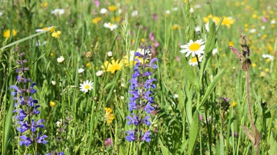Artenvielfalt auf einer Wiese. (Bild: PD)