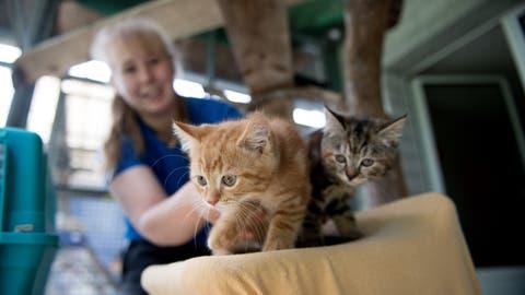 Tina  Fluder vom Tierheim an der Ron in Root mit 2 von 40 Katzen, die derzeit im Heim leben. (Bild: Corinne Glanzmann, 17. Juli 2019)