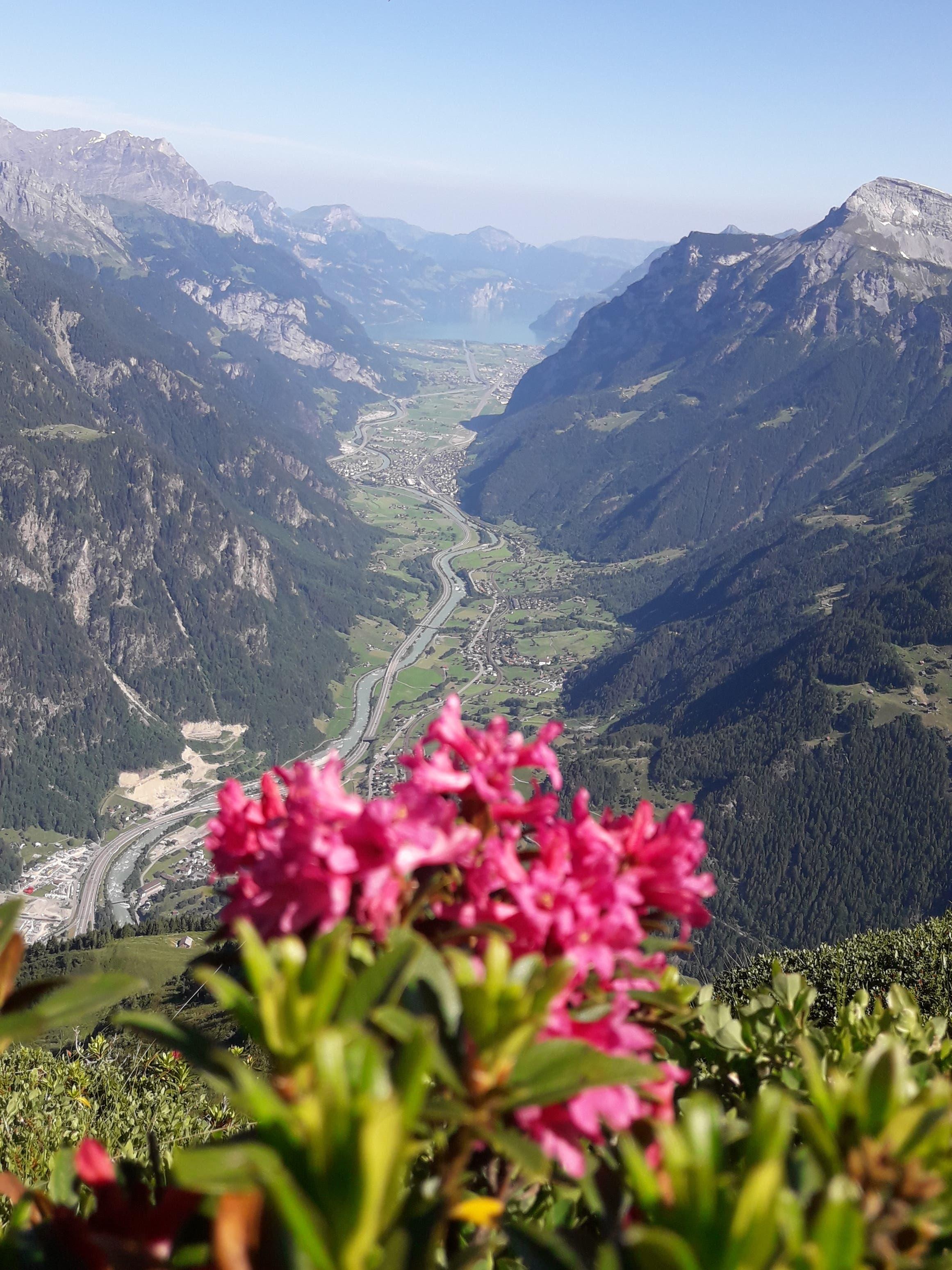 Blick vom Bristensee über's Urner Unterland. (Bild: Gustav Tresch, 30. Juni 2019)