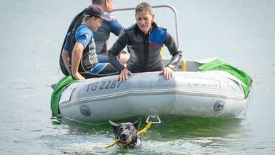 Hunde als Rettungsschwimmer