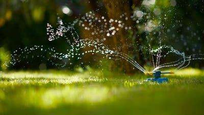 Aufs Rasensprengen sollte während der aktuellen Trockenphase verzichtet werden. (Bild: Getty Images)