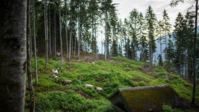 Aktuelle Trockenheit ist für Schweizer Wälder verkraftbar