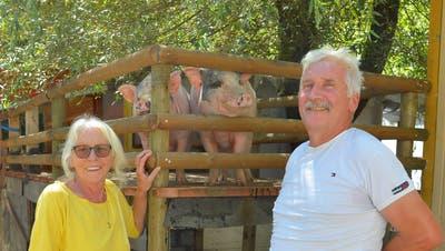 Rosmarie und Rudolf Langjahr mit ihren Mini-Pigs. Diese geniessen den Schatten auf ihrem Balkon im grossen Gehege. (Bild: Mario Testa)