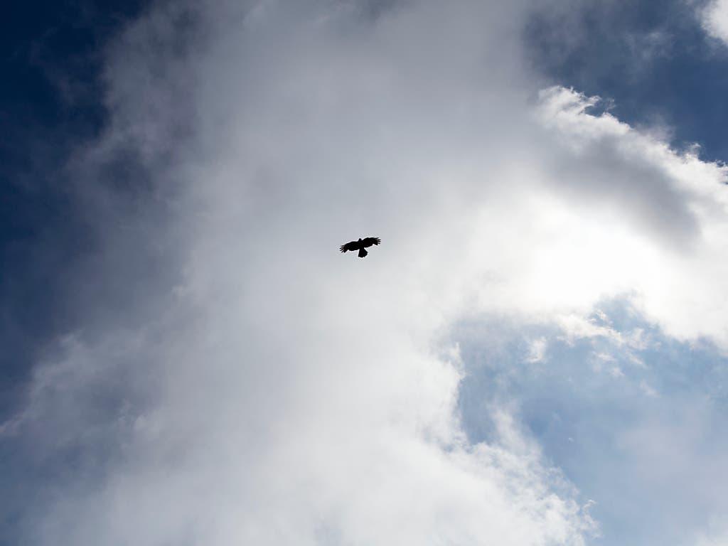 Raubvögel stellen im Luftverkehr ein Sicherheitsrisiko dar. (Bild: KEYSTONE/GAETAN BALLY)