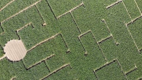Blick von oben auf das Maislabyrinth. Der runde Freiraum symbolisisert einen Dorfplatz. (Bild: Reto Martin)