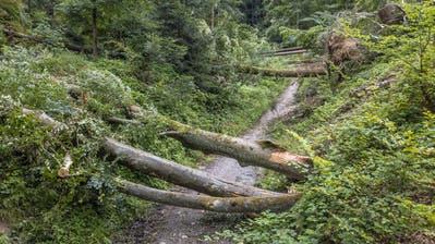 ImBireggwaldin der Nähe des Vita Parcours sind mehrere Bäume entwurzelt worden. (Bilder: Pius Amrein, Horw, 8. Juli 2019)