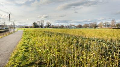 Auf diesem Feld neben dem Freibad HörnliKreuzlingen wird dasReka-Feriendorf gebaut werden. (Bild: Andrea Stalder)