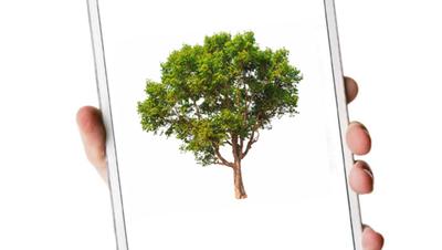 Ein Blick auf die App und der Förster weiss, welche Bäume er pflanzen soll.(Bild: Shutterstock/ HO)