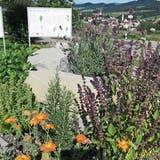 Südlich der Gartenwirtschaft des Hotels Wolfensberg wurde eine dicht bepflanzte Kräuterspirale angelegt. (Bilder: Andrea Häusler)
