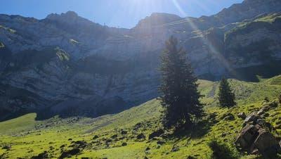 Wandertipp: Berge, Bäume, und Blumen – Von der Schwägalp auf den Kronberg