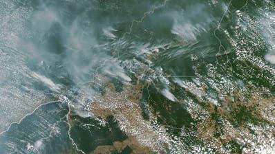Zahl der Waldbrände in Brasilien drastisch gestiegen