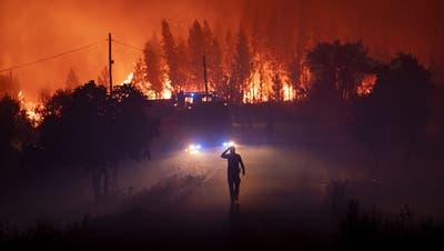 Die Lunge der Erde brennt: Diese Bilder zeigen, wie verheerend die Brände im Amazonas sind