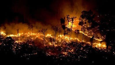 Amazonas: Das Inferno im Regenwald