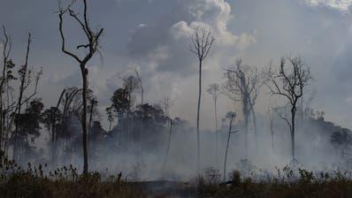 Der brennende Amazonas befeuert den Streit um das Freihandelsabkommen der Schweiz mit den Mercosur-Staaten. (Bild: Keystone)