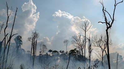 G7-Länder sagen Millionen-Soforthilfe gegen Amazonas-Brände zu