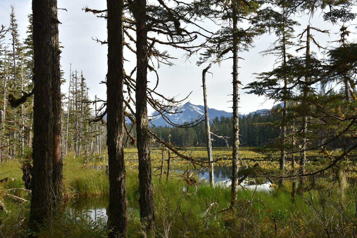 Unendliche Weiten: der Situk Lake Trail im Tongass National Forest (Bild: Keystone/Spiegel Online/Washington Post)