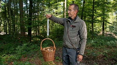 Der Obwaldner Naturaufseher Eugen Gasser wiegt Pilze. (Bild: Corinne Glanzmann, Giswil, 27. August 2019)