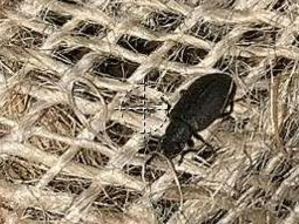 Lebendige Käfer aus Indien wurden bei einer Zollkontrolle in Basel in einem Container enteckt. (Bild: EZV)