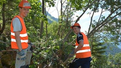 Urner Bäume leiden unter Trockenstress