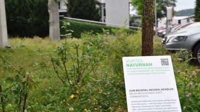 Grüne Vielfalt statt Monotonie vor dem Gemeindehaus in Eschlikon: Eine Infotafel gibt Auskunft. (Bild: Christian Kamm)