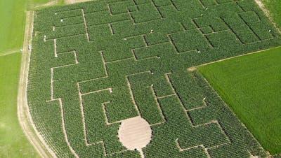 In Langrickenbach befindet sich das grösste Maislabyrinth der Schweiz. (Bild: Reto Martin)