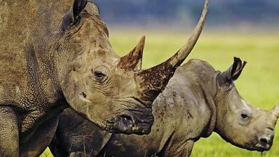 Südliches Afrika bläst zur Jagd auf Elefanten und Nashörner