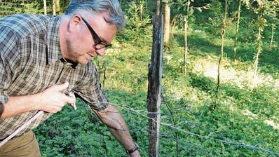 Der Kampf mit dem Stacheldraht: Ostschweizer Jäger sorgen sich um die Sicherheit des Wildes
