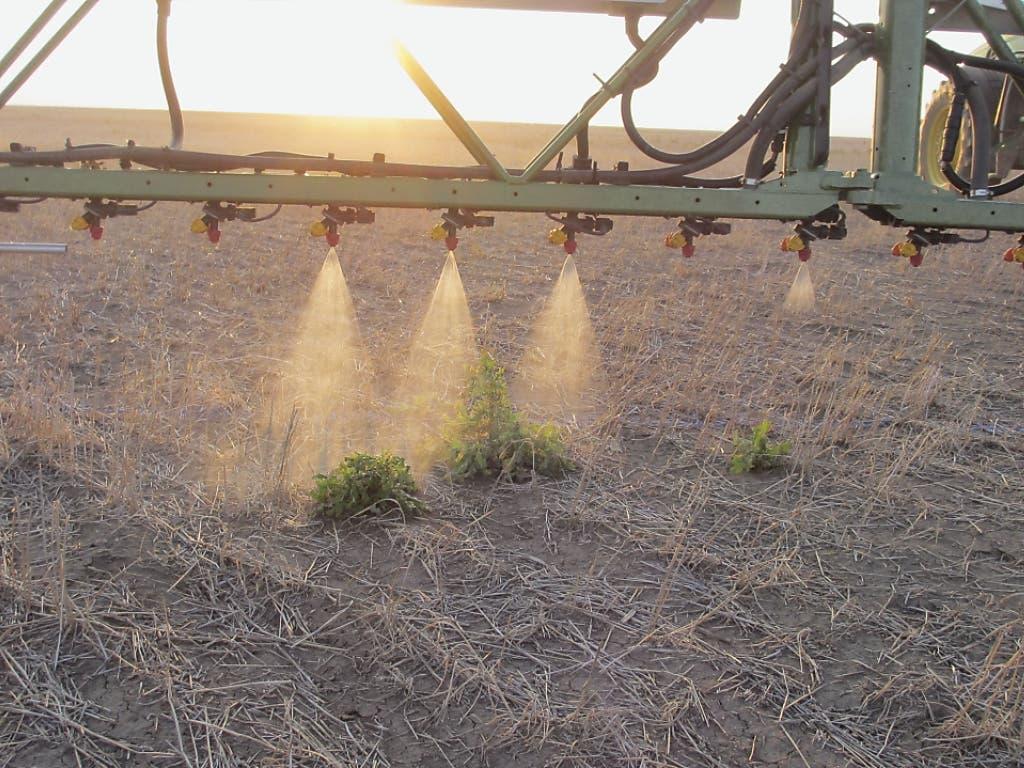 Dank Sensoren wird nur dort gespritzt, wo wirklich auch eine Pflanze wächst. (Bild: Kompetenzzentrum Land- und Ernährungswirtschaft Strickhof)