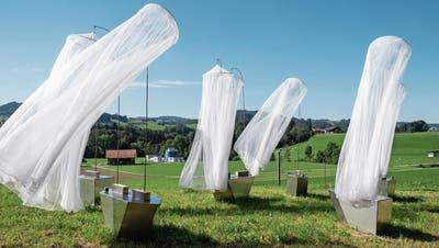Die Milane kreisen in Ganterschwil: Gruppenausstellung bespielt ehemalige Mayer-Fabrik