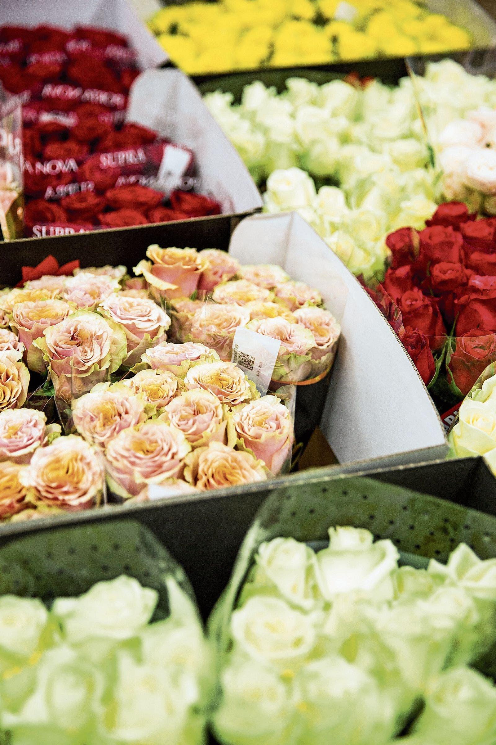 Ein rasch vergänglicher Luxusartikel: Blumen sind durchschnittlich eine Woche bis zehn Tage haltbar. (Bild: Mareycke Frehner)