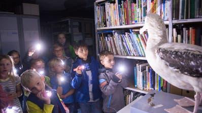 Im Naturmuseum können Kinder Möwen und andere Vögel im Schein der Taschenlampe aufspüren. (Bild: Ralph Ribi, 5.9.2015)