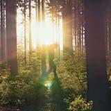 Der Wald als Ort fürs Leben mit Bedacht