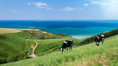 Sie sehen richtig: Das Baskenland sieht der ländlichen Schweiz zum Verwechseln ähnlich – wäre da nicht das tiefblaue Meer. Bild: Getty Images