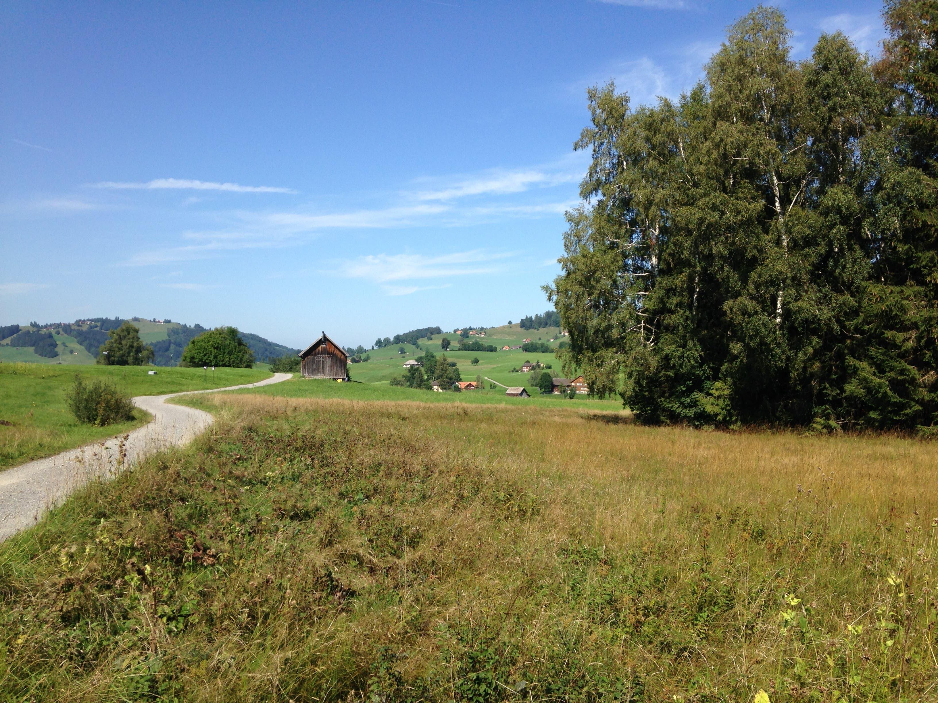 Die Landschaft mit den letzten Resten des Hochmoors bei Gais eignet sich gerade bei schönem Spätsommerwetter ideal für einen ausgedehnten Spaziergang. (Bild: Reto Voneschen - 31. August 2019)