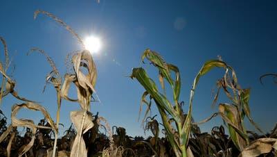 Nach dem Hitzesommer 2018 forderten drei Kantonsräte ein Konzept zum Umgang mit Wasserknappheit. (Bild: Donato Caspari, 15. Oktober 2018)