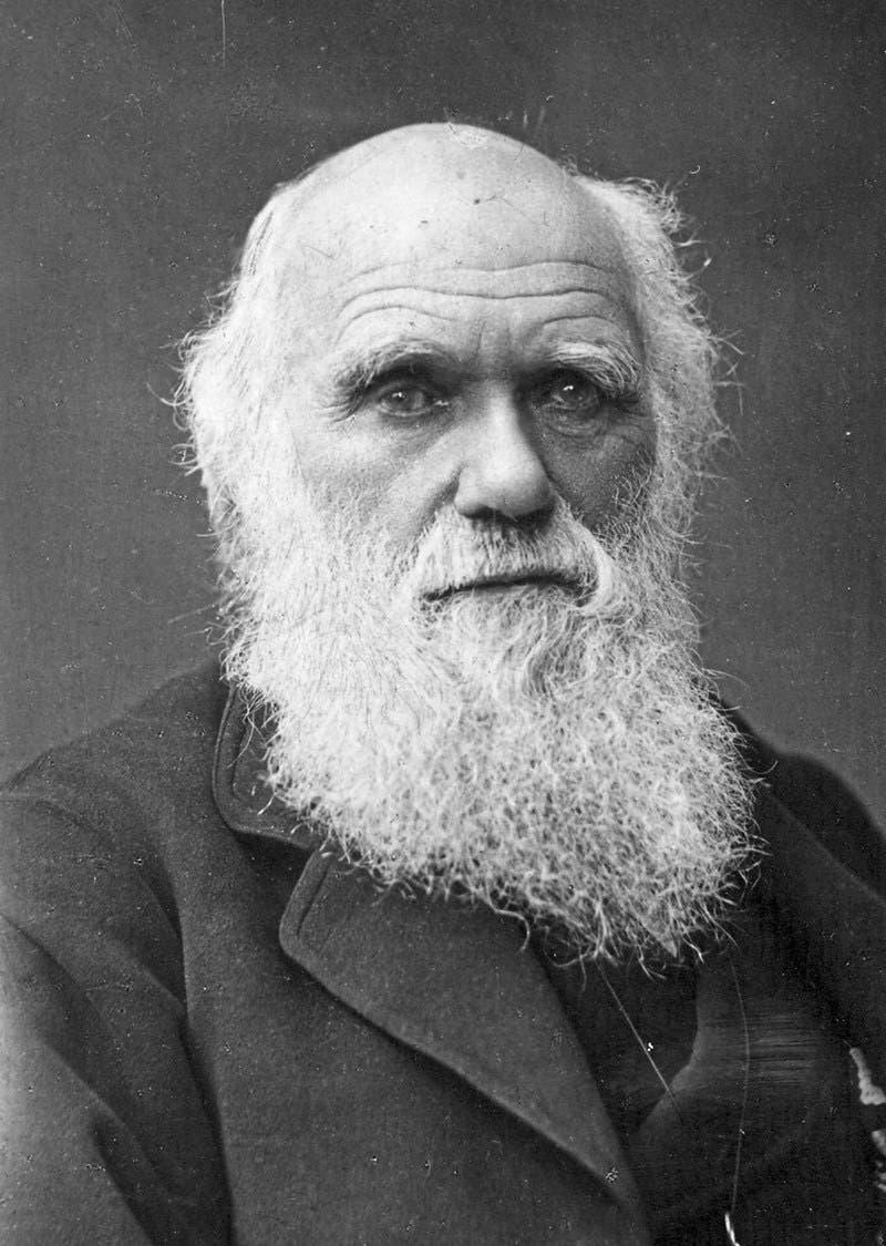 Charles Darwin, Naturwissenschafter:«Ich bewunderte früher Humboldt, jetzt bete ich ihn beinahe an; er allein gibt einen Begriff von den Empfindungen, welche in der Seele erregt werden beim ersten Betreten der Tropen.»