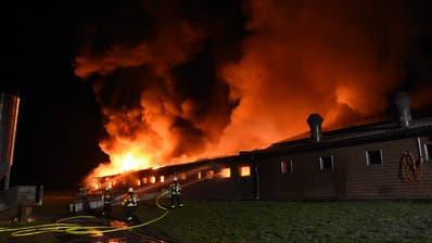 Am Montag, 6. Januar 2020 ist in einem Schweinestall im Brueel ein Brand ausgebrochen.Trotz des schnellen Einsatzes der Feuerwehr starben in den Flammen 400 Schweine. ((Bild: Kapo SG))