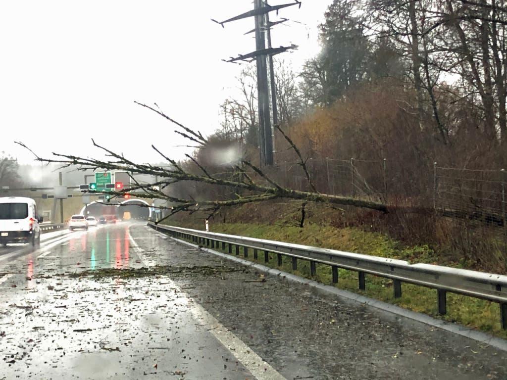 Auf der Autobahn bei Ebikon haben umgestürzte Bäume den Verkehr beeinträchtigt.