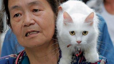 Neue Krankheiten kommen oft über die Tiere – und sogar via Hauskatzen