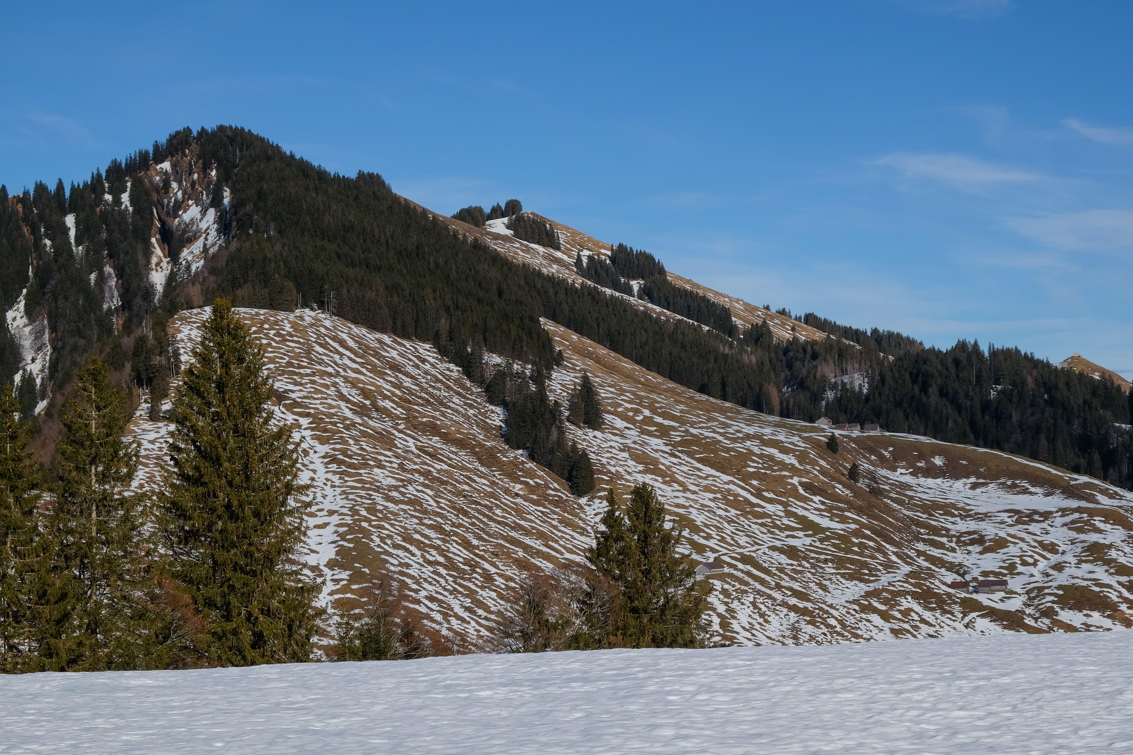Momentan typische Winterlandschaft am südwestlichen Kronberg.